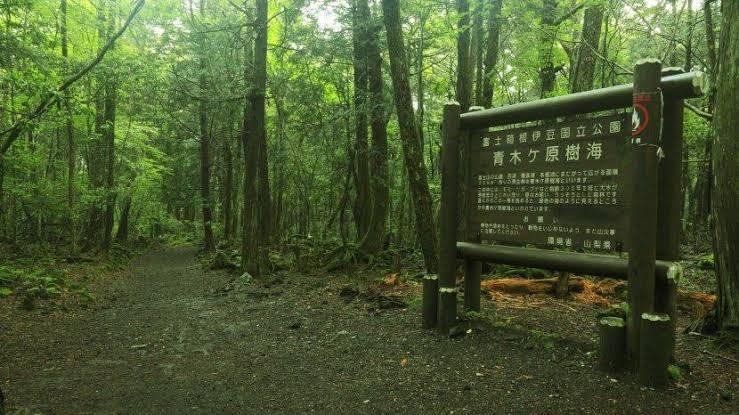 hutan aokigahara tempat terseram di dunia