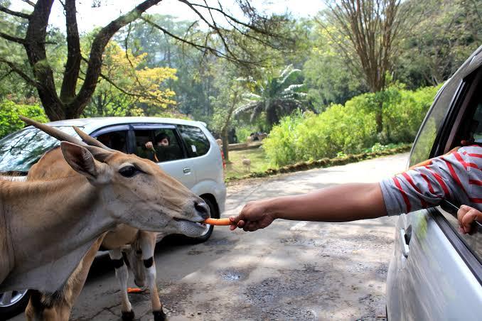 taman safari salah satu tempat wisata keluarga di jakarta dan sekitarnya